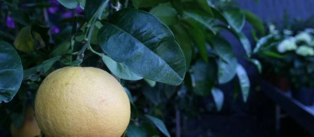 Frutt2